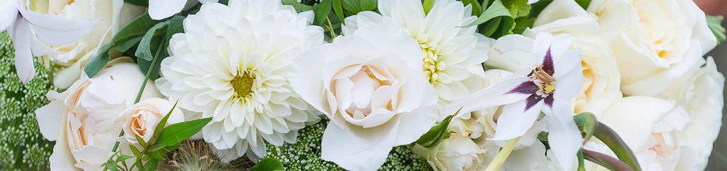 White, Ivory & Cream Flowers