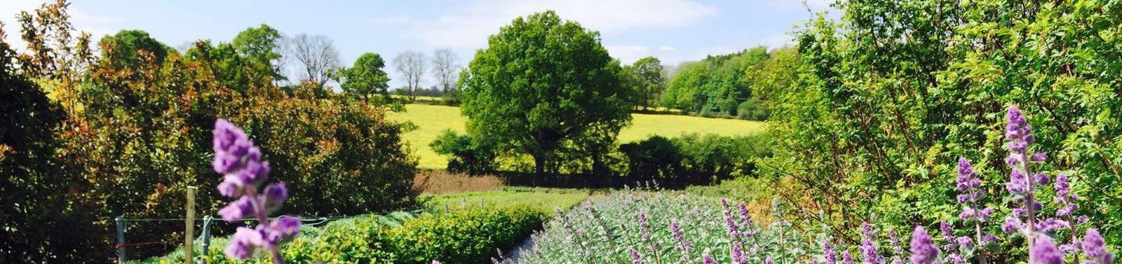 Seasonal Foliage & Herbs