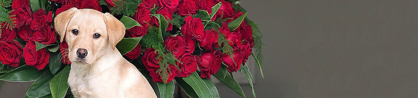 Red Valentine's Roses