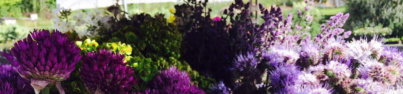 Seasonal Garden Flowers