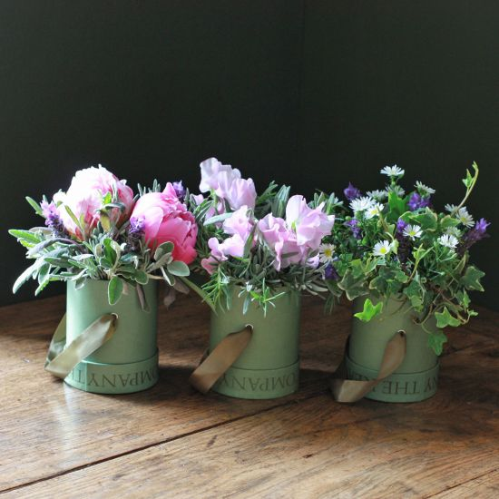 Chelsea Cottage Garden Trio
