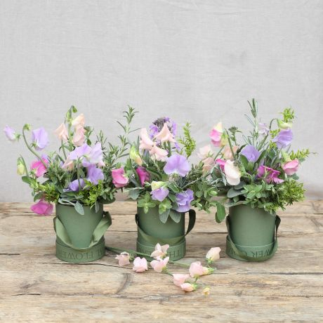 British Sweet Pea Trio