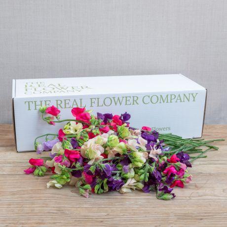 british sweet pea stem box