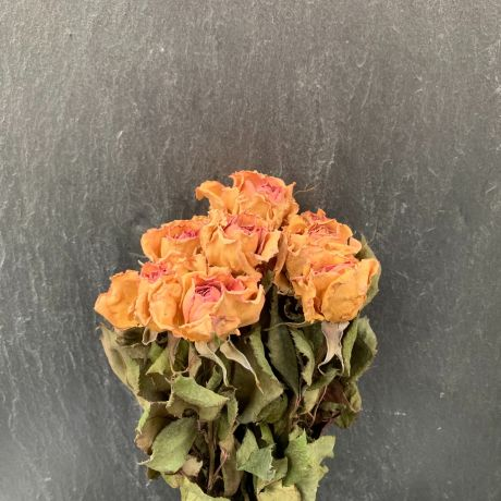 Dried English Roses