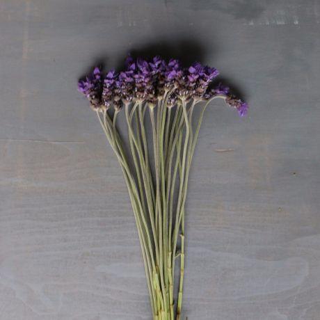 Flowering Lavender - Kenya
