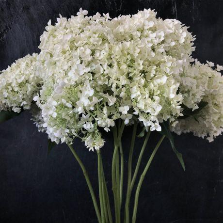 Hydrangea Annabelle white - large