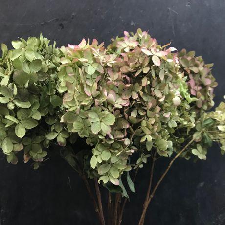 Hydrangea Small