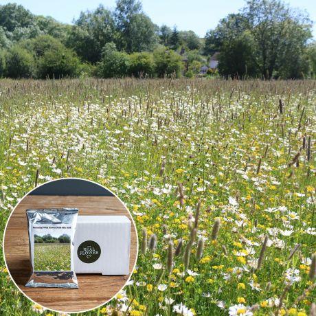 Perennial Wild Flower Seed Mix Acid - 200g