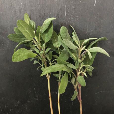 Sage Green - 35cm
