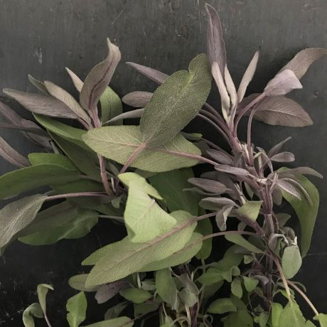 Sage Purple - 35cm