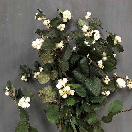 Snowberry White - 50cm