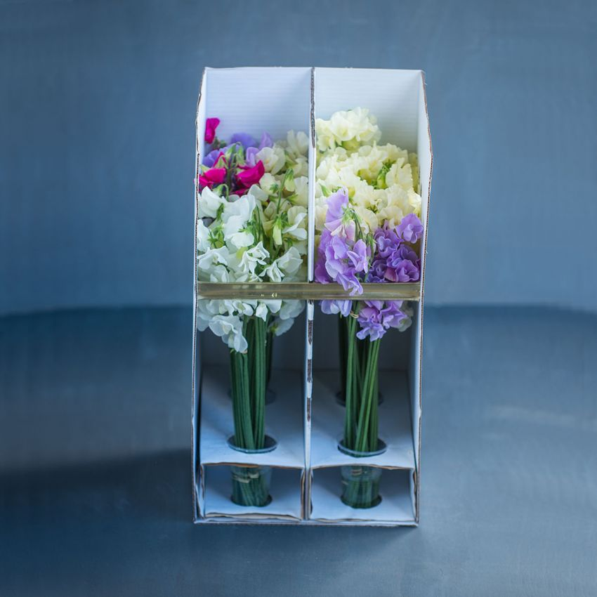 Stems of Sweet Peas - From: