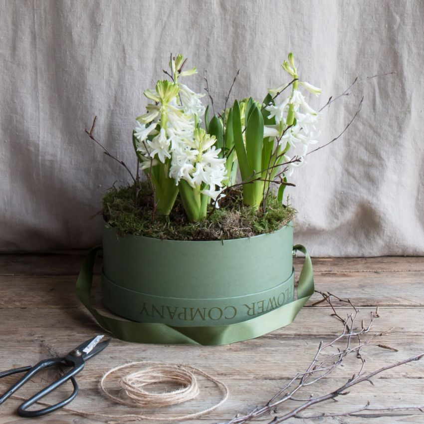 White Hyacinth Bulb Hat Box Arrangement