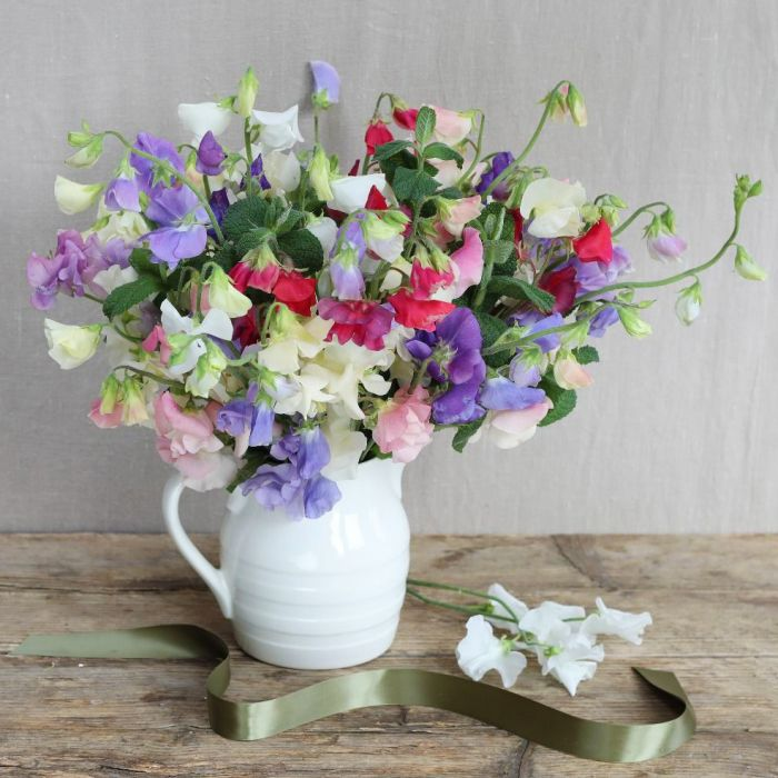 Simply Sweet Pea Bouquet The Real Flower Company