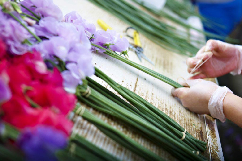 10 sweet peas facts florist hands