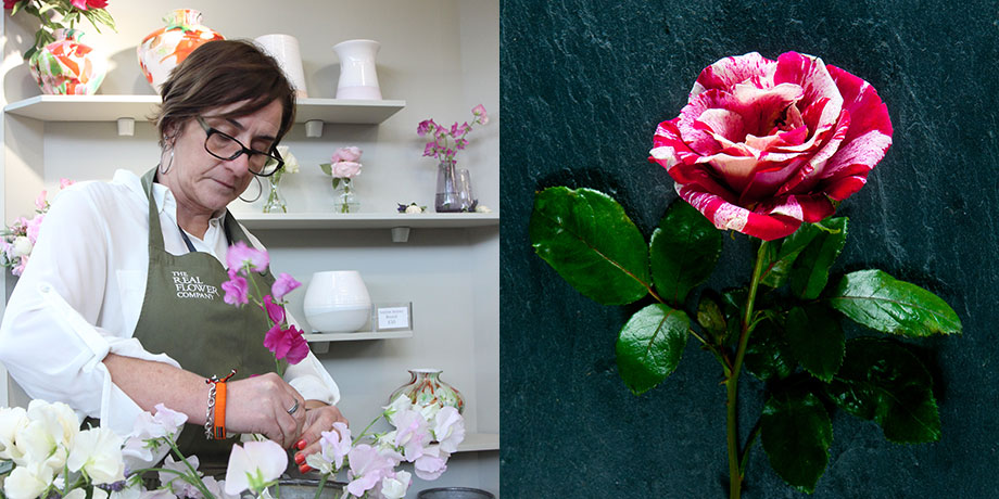 Catherine for British Flower Week with her favourite English rose Rachel Louise Moran