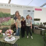 Coming up Roses at The RHS Hampton Court Flower Show