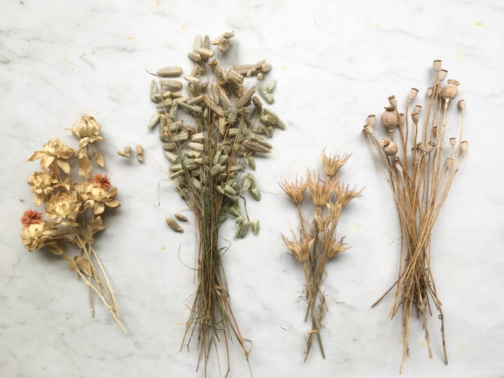 The beauty of grasses and seed heads