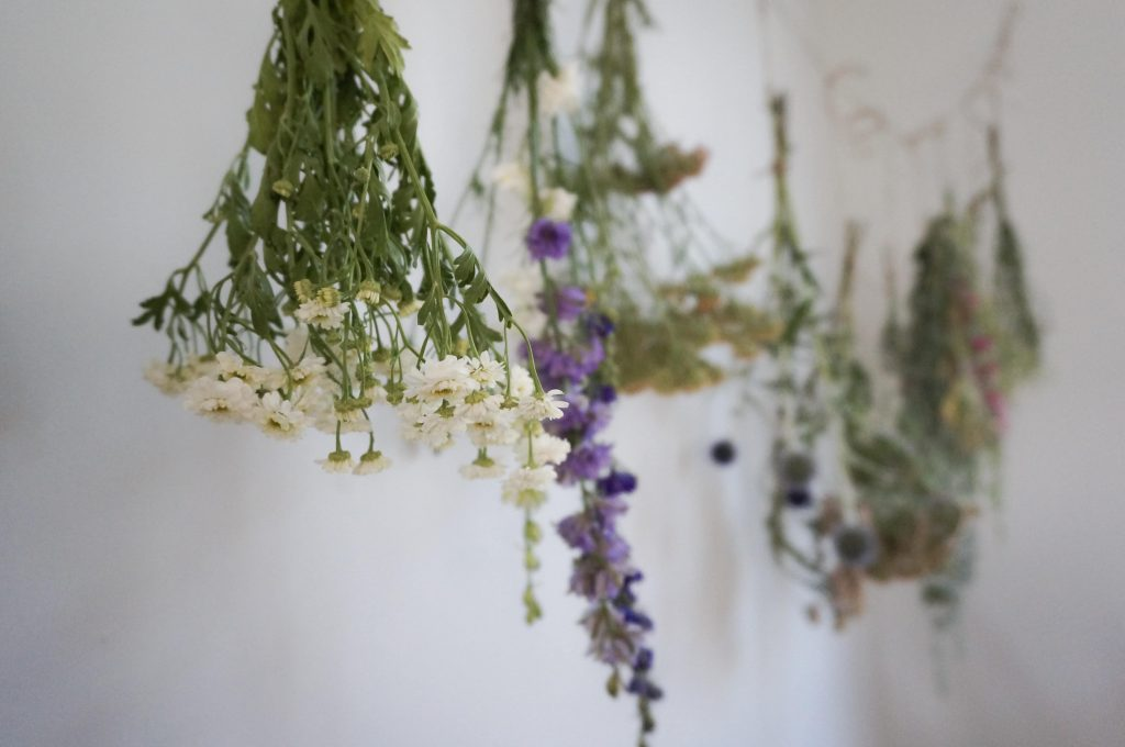hanging drying flowers