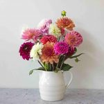 10 Delightful Facts about Dahlias