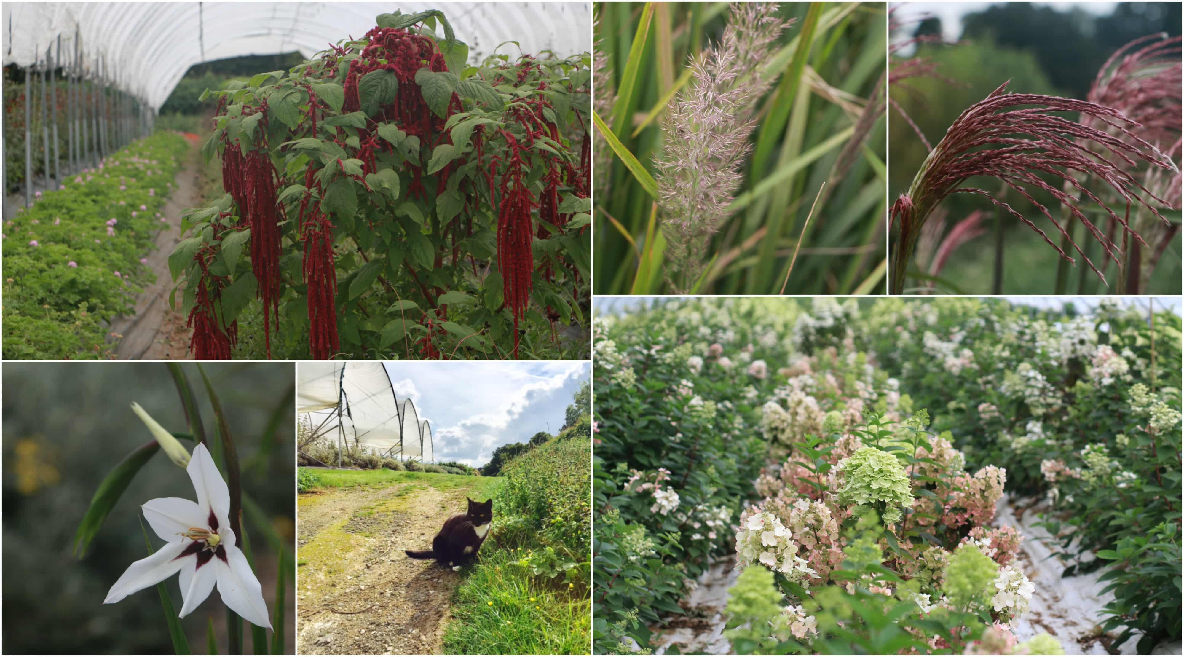 september on the farm