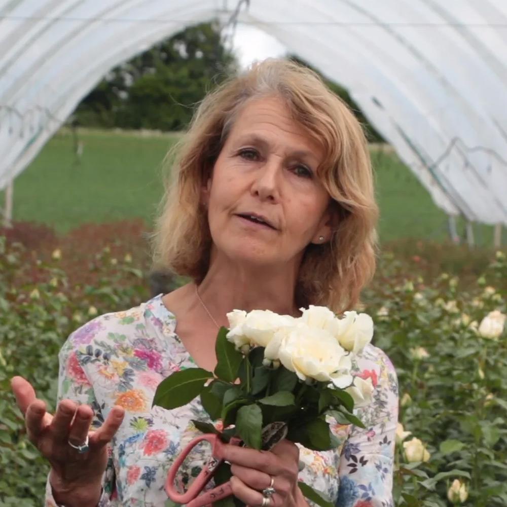Farm Tour for British Flowers Week