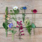 English Seasonal Flowers That Make The Cut