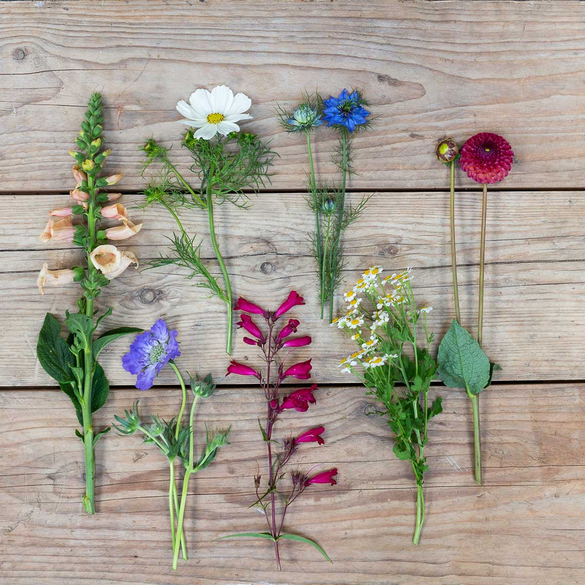 English Seasonal Flowers That Make The Cut