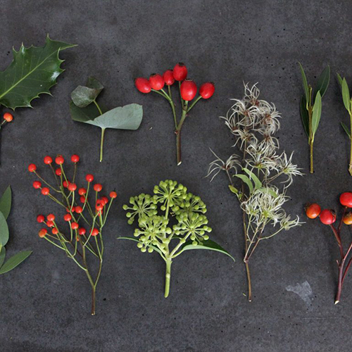 How to Forage for Winter Decorations