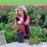 How To Grow Our Garden Rose Plants