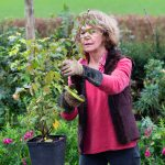 Top tips for pruning roses