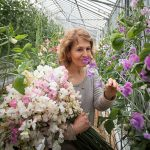How to Grow Sweet Peas in a Pot